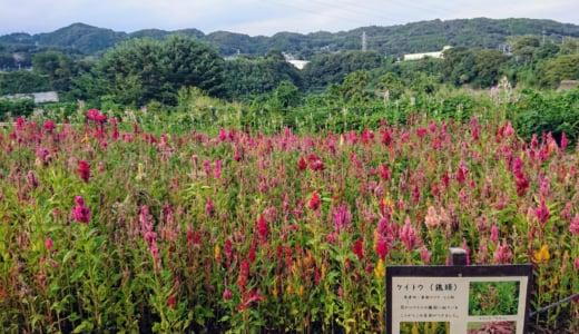 城山(神奈川県)に登ってきました&お役立ち情報(後編)