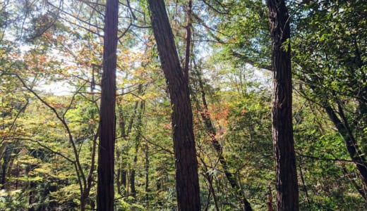 小松ハイキングコースから草戸山を経て高尾山口駅までのハイキング(前編)