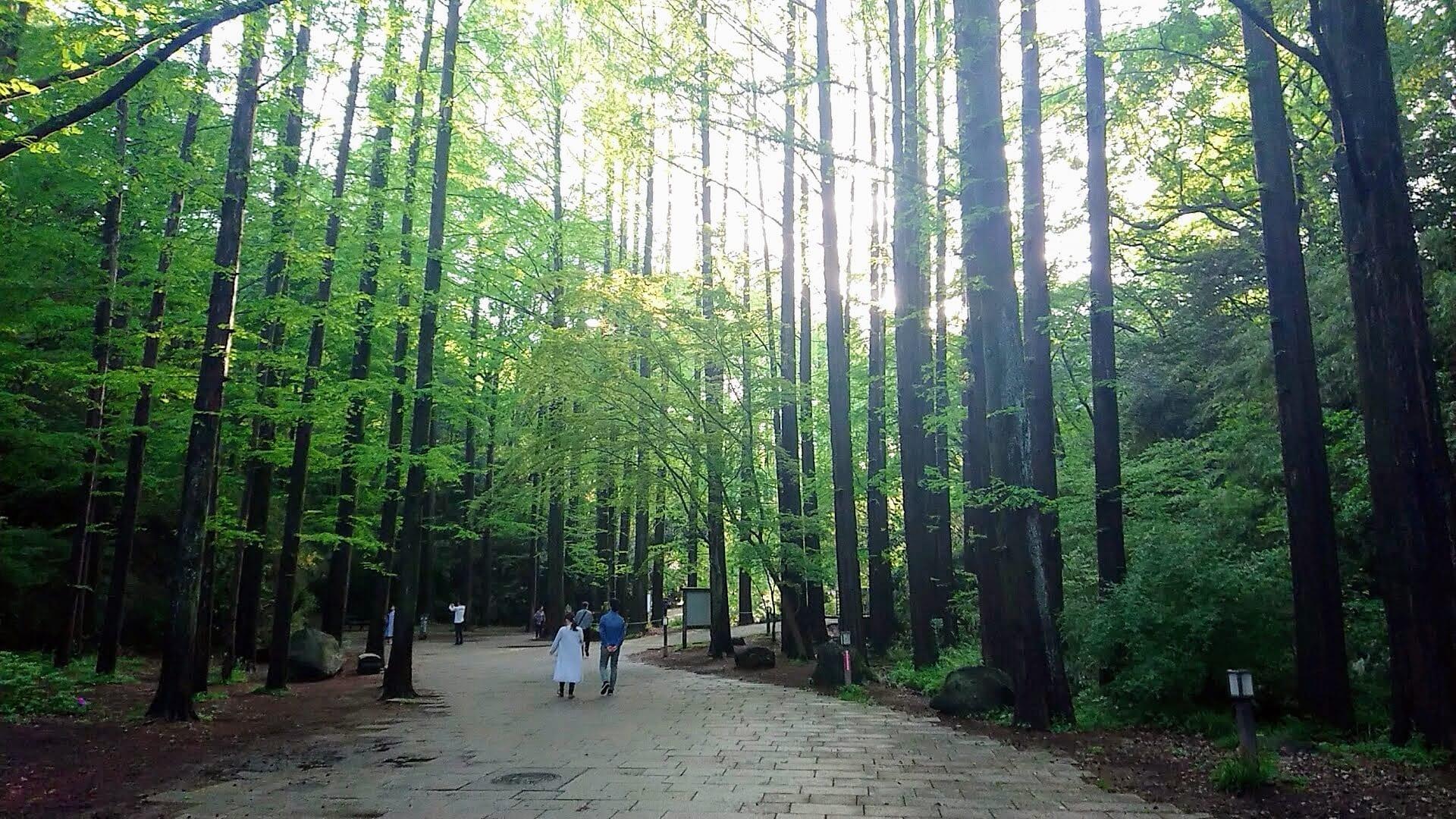 コロナ疲れを癒やすスポットとして「生田緑地」がお薦めされていました