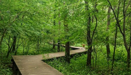 小さなお子さんのハイキングデビューにも♪ベビーカーでもOKの小道もある、雑木林を散策できる「小宮公園」(水飲み場・トイレ情報有)@八王子