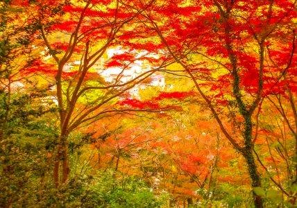 「高尾の天狗とミドリの平日」を読んで、高尾山で火渡り祭が行われていること、ゲストハウスがオープンしていたことを知りました