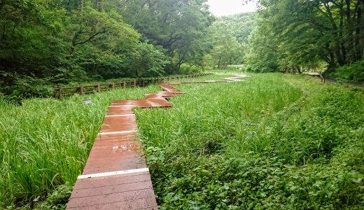 中山駅から徒歩15分!蛍が生息する里山の風景がそのまま残る「四季の森公園」