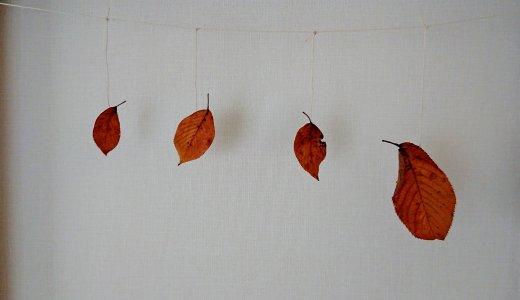 落ち葉を綺麗に保存する裏ワザを試してみました&落ち葉のカーテンの作り方