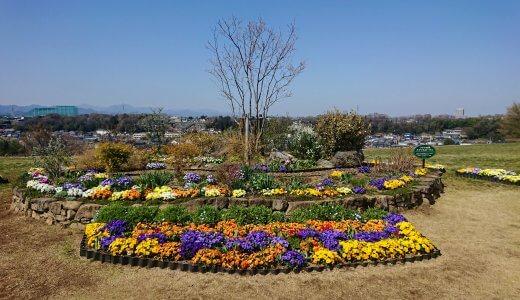 凧あげができる芝生広場が人気の「片倉つどいの森公園」(入園無料)の花壇のお花がとっても綺麗でした!(水飲み場・自販機・トイレ情報、注意事項有)